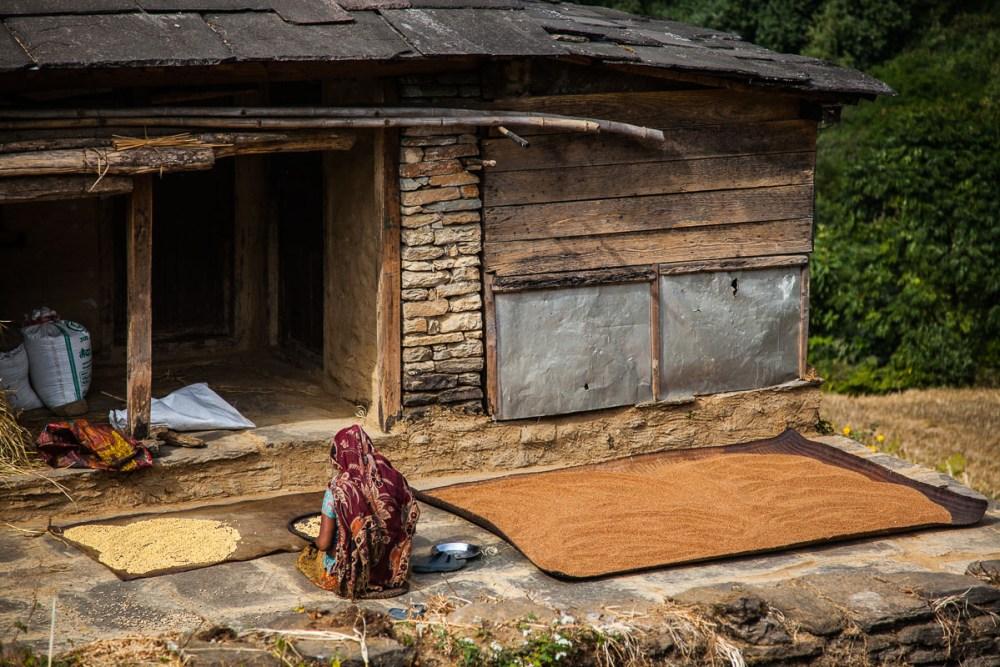 Mujer campesina separando el arroz