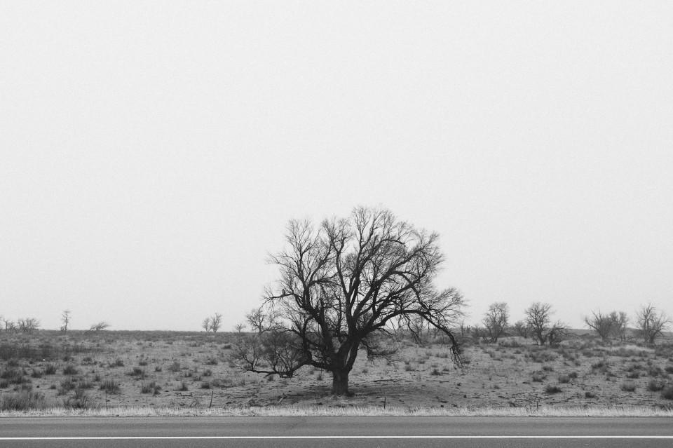 Roadside Series
