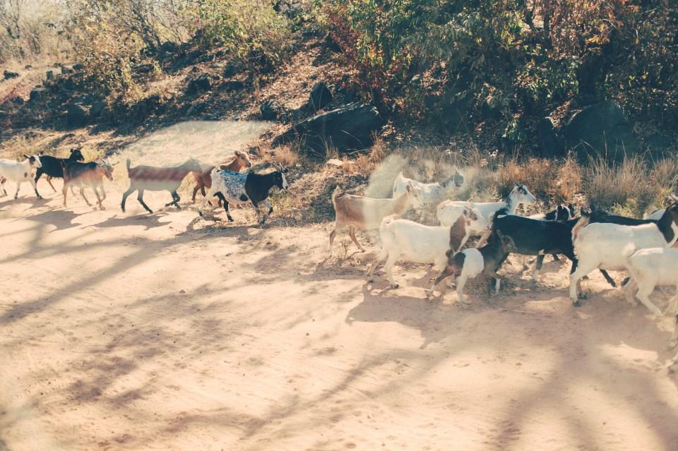 Africa-0225