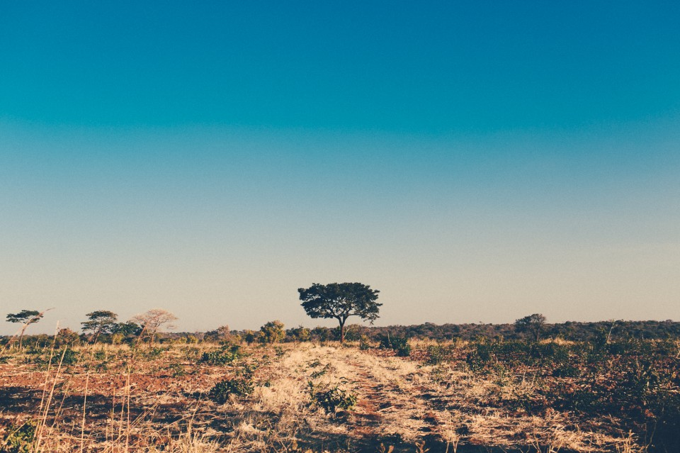 Africa-1226