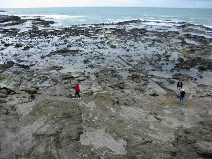 The view over the Jurassic Curio Bay fossil forest from the viewing platform. Fossil logs can be seen criss-crossing the tidal platform among hundreds of fossil stumps.