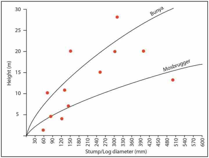 The dimensions of actual logs in the sediment overlying the Curio Bay fossil forest (red dots) compared with the Mosbrugger et al. (1994) and Bunya Mountain tree trunk diameter versus height curves.
