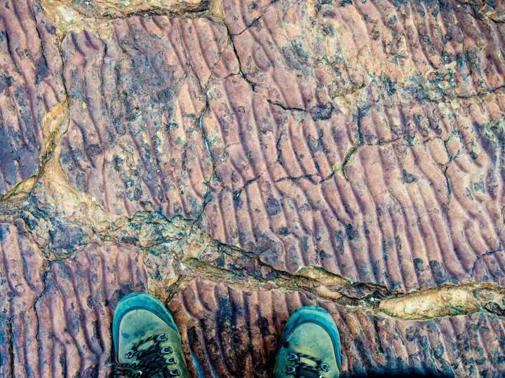 'Fossil' ripples marks on the surface of Mereenie Sandstone, Kings Canyon. central Australia. These will have formed in shallow water.