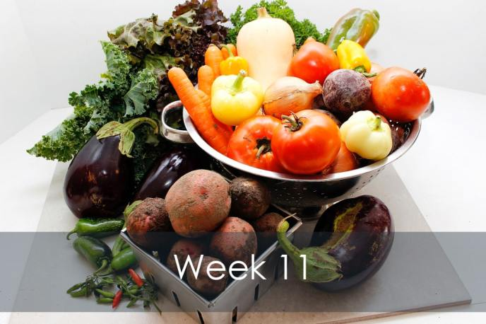 Organic Vegetable CSA share basket Week 11