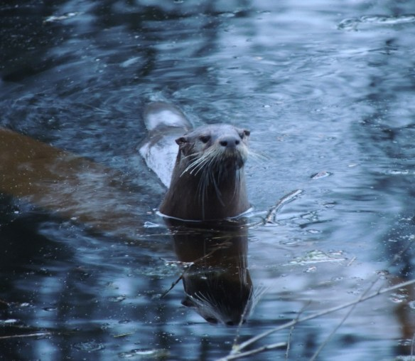 Otter10