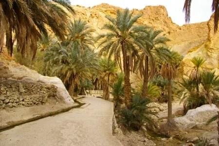 Oasis de Montanha na Tunisia