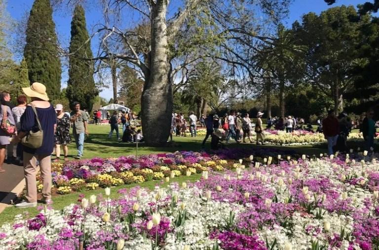 Festival das flores de Toowoomba