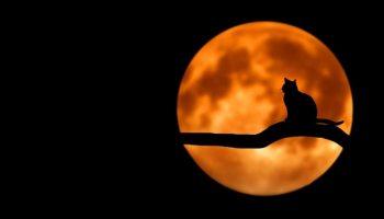 Kissa kuutamolla