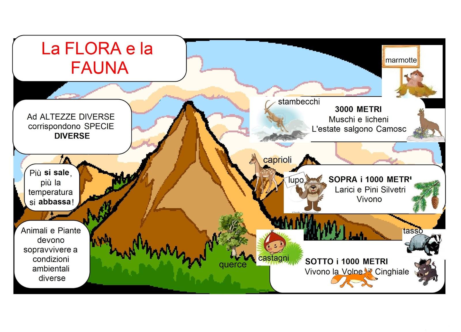 flora fauna11