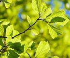 Sostenibilità: Milano nella top 10 mondiale dei green jobs
