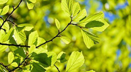 ForestaMI: tre milioni di alberi entro il 2030