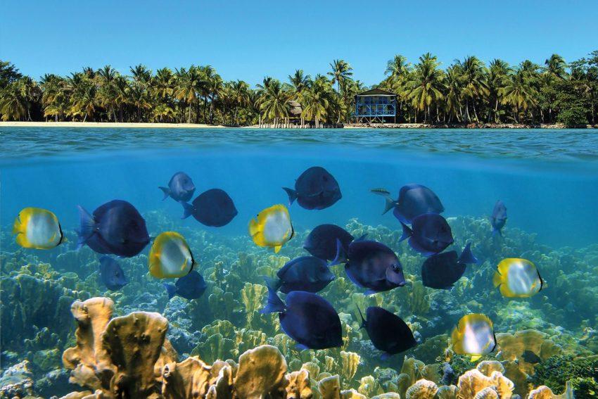 La colorata barriera corallina di Bocas del Toro, sulla costa caraibica di Panamá