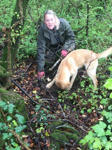 A caccia di tartufi con la labrador Lisa