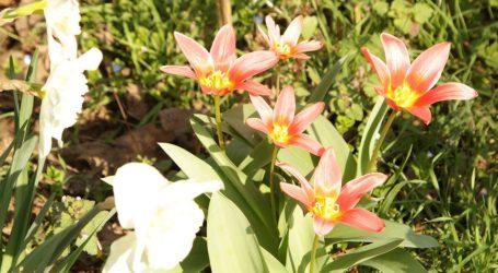 In zona Greco nasce Il giardino di Bing