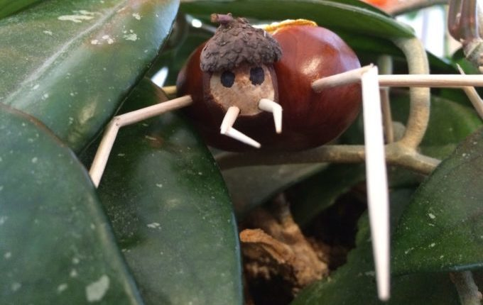 Bastelideen für den Herbst - Spinne