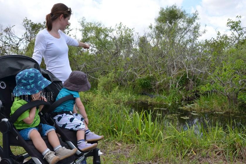 Everglades mit Kleinkind Shark Valley