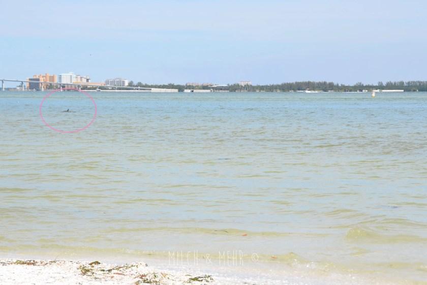 Florida mit Kindern Delfine auf Sanibel Island am Strand