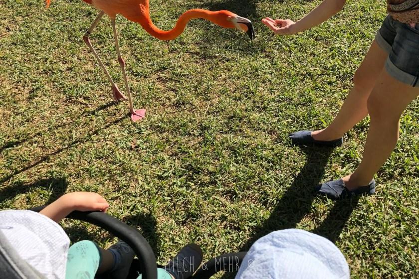 Florida mit Kleinkind Sarasota Jungle Gardens Flamingo fuettern