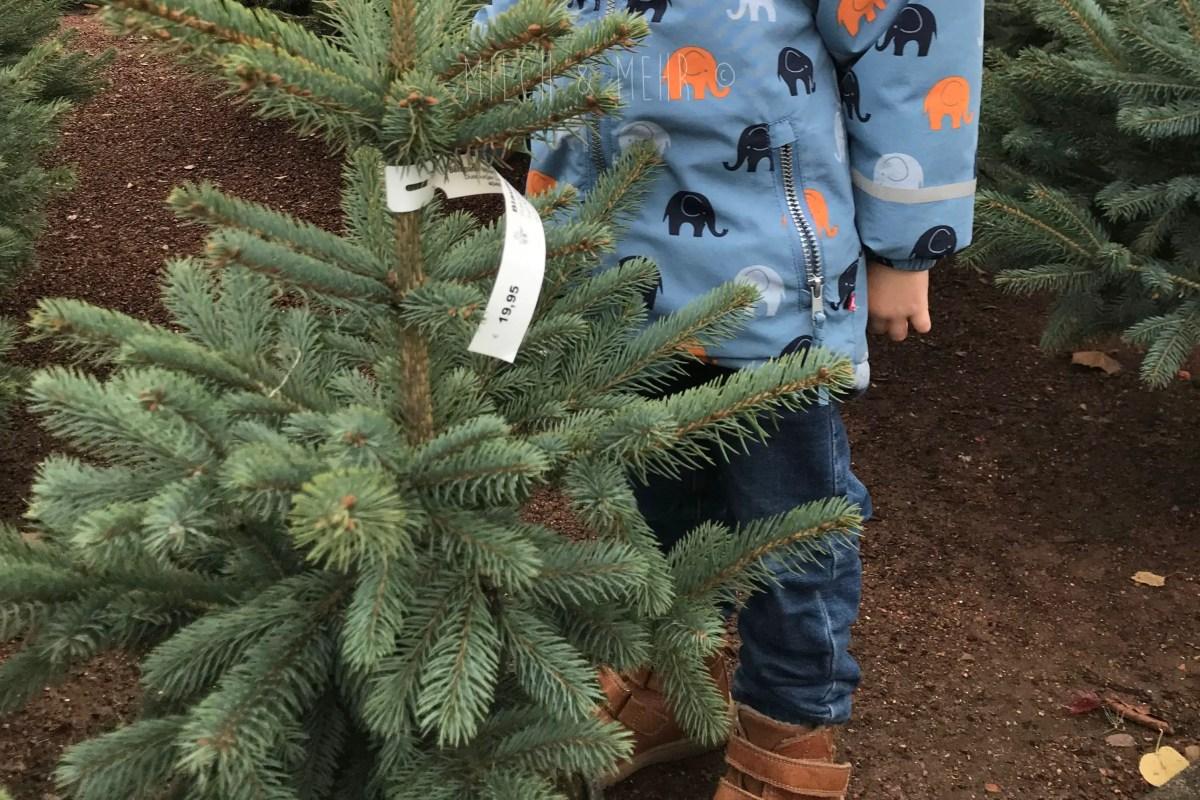 WIB #kw47 Mini Tannenbaum gesichtet