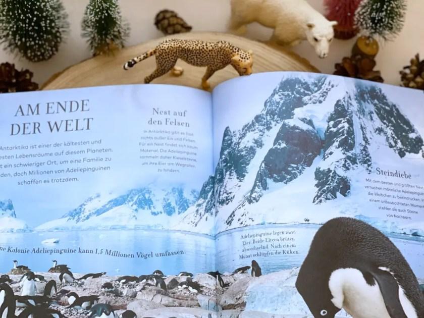 Kinderbuch Antarktis