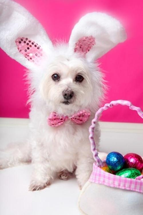 Fonte: http://dogtime.com/25-easter-dog-pictures.html