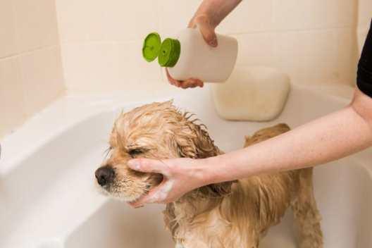 shampoo para bebês
