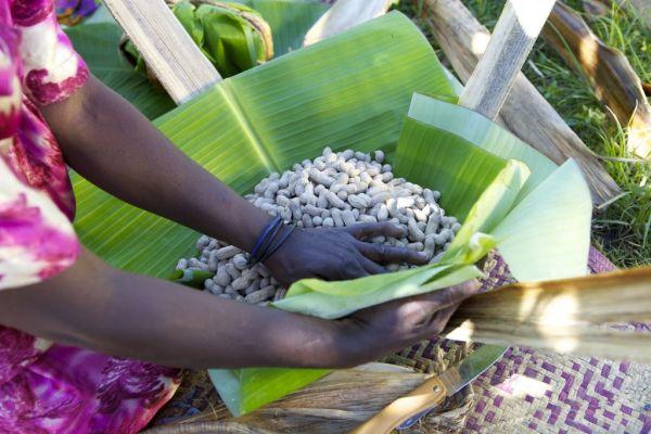 A banana leaf being used to wrap up peanuts, Uganda.