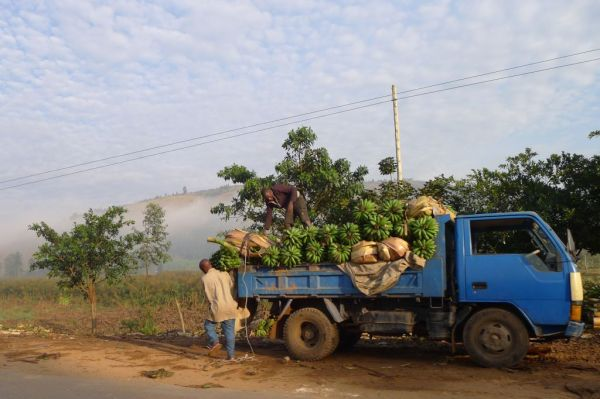 Bananas being loaded off a truckby the side of the road, Tanzania, Africa
