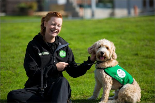 Assistance dog puppy with trainer