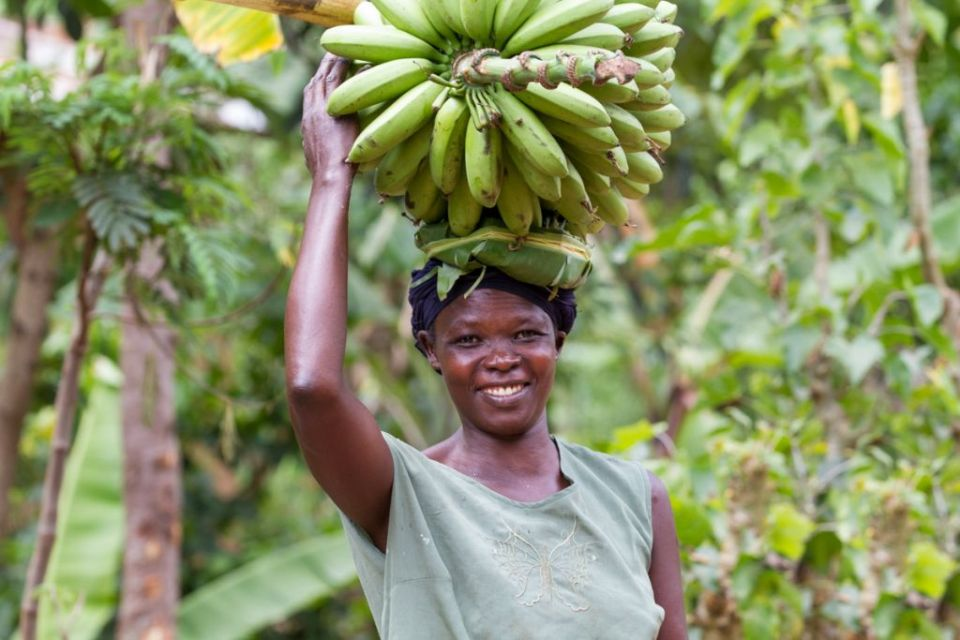 A lady carries bananas on her head, Uganda