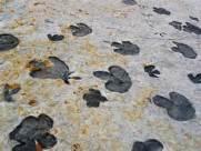 DinosaurRidge tracks