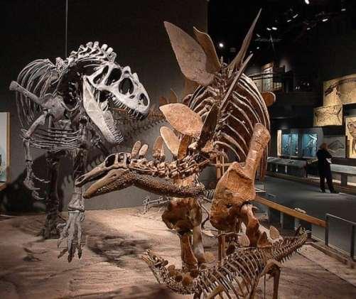 DMNS-dinosaurs