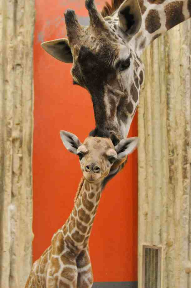 2019 Free Days at Denver Zoo - Mile High on the Cheap