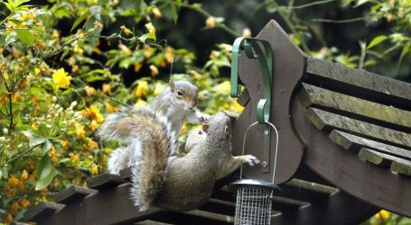 4 Fun Squirrel Feeders for Backyard Entertainment