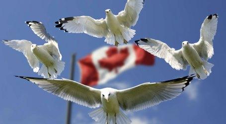 Oportunidades  no Canadá