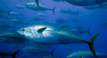 470 quilos de pescado apreendidos