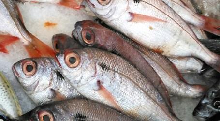 Pescadores com reforço de quota de goraz