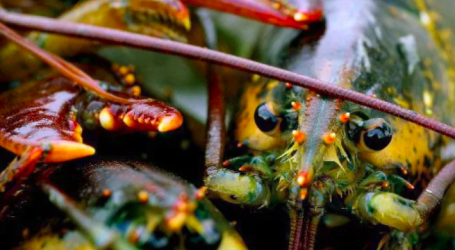 Lobster fishery likely to continue inside federal Eastern Shore Islands protected area