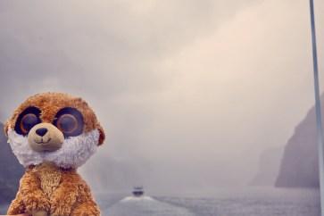 Ed, Educto, das Erdmännchen, meerkat, nass, wet, Milford Sound, regnerisch, Regen, schlechte Sicht