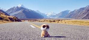 Ed, Mount Cook, Road, Strasse, National Park, Nationalpark, on his way, Reisemaskottchen, maskot, Reiseblog, Travelblog