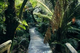 Great Otway, National Park, Weg, Pfad, Rundweg, Maits Rest Forest Walk, Palmen, Regenwald, rainforest, dicht, wunderschoen, kurz, Spaziergang