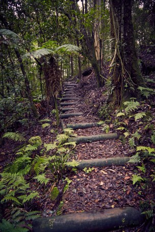 Barrington Tops National Park, Wanderweg, wandern, Weg, Regenwald, rainforest