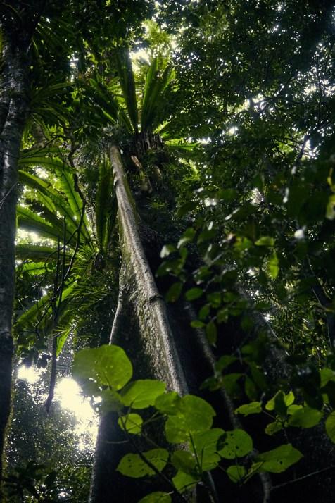 Dorrigo National Park, Australia, Australien, Womba Walk, Pflanzen, Regenwald, Farne, sonnig, Wanderweg, wandern