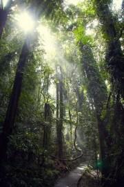 Sonnenlicht, durchflutet, Regenwald, Urwald, Dorrigo National Park, Australia, Australien, Womba Walk