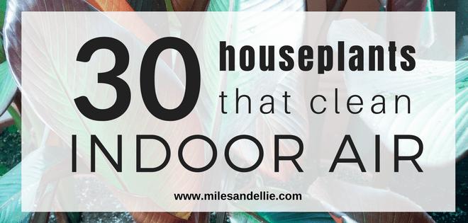 30 HOUSEPLANTS THAT CLEAN INDOOR AIR