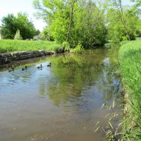 Starkweather Creek