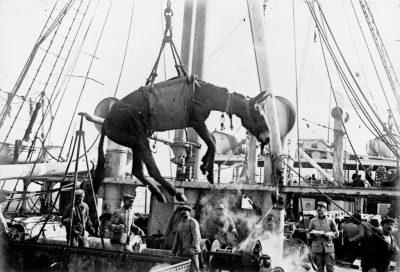在第一次世界大战中从一艘德国船上卸下一头骡子。