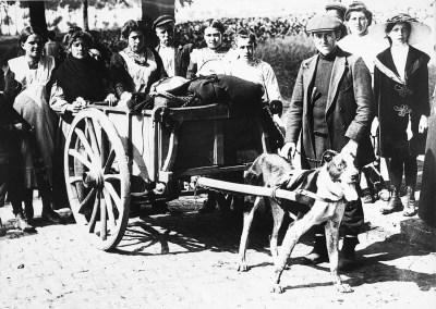 I civili belgi usano un cane per trasportare i loro effetti personali