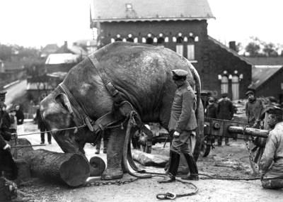 Un elefante dello zoo al servizio dell'esercito tedesco
