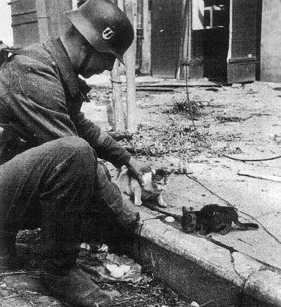 武装党卫队的一名士兵抚摸小猫